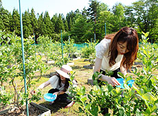 Oga Blueberry Garden